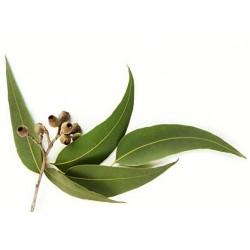 Eukaliptusz gőzkabin illat, 1 liter